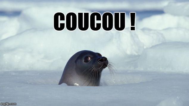 phoqe-coucou